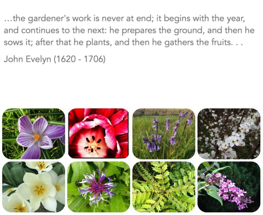 flowercollage